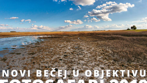 "Exhibition ""Novi Becej in Focus-Photo safari 2019"""